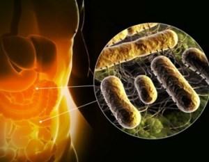 микроорганизмы в кишечнике
