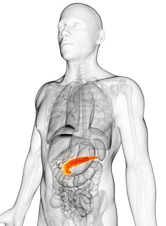 фото точного месторасположения поджелудочной железы
