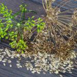 листья крапивы и укропа