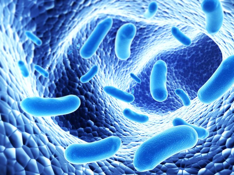 Полезные бактерии в кишечнике