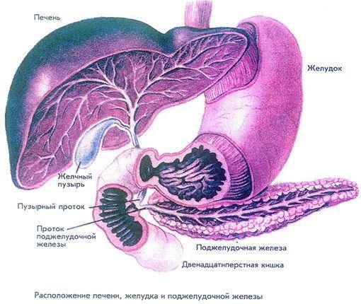 проекция органа