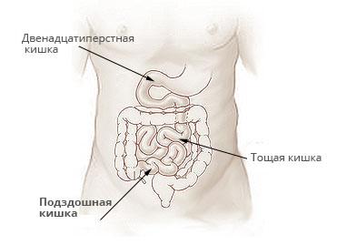 тонкий и толстый кишечник и желудок