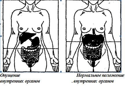 Схема опущения внутренних органов человека