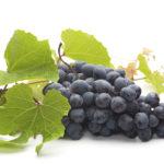 Чёрный виноград